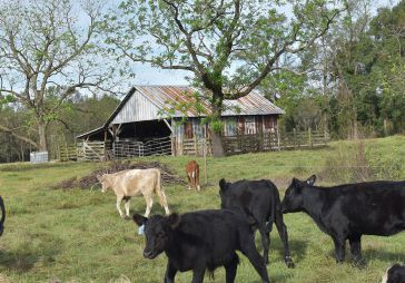 Everything Joyce Farms Has Taught Us About Regenerative Farming