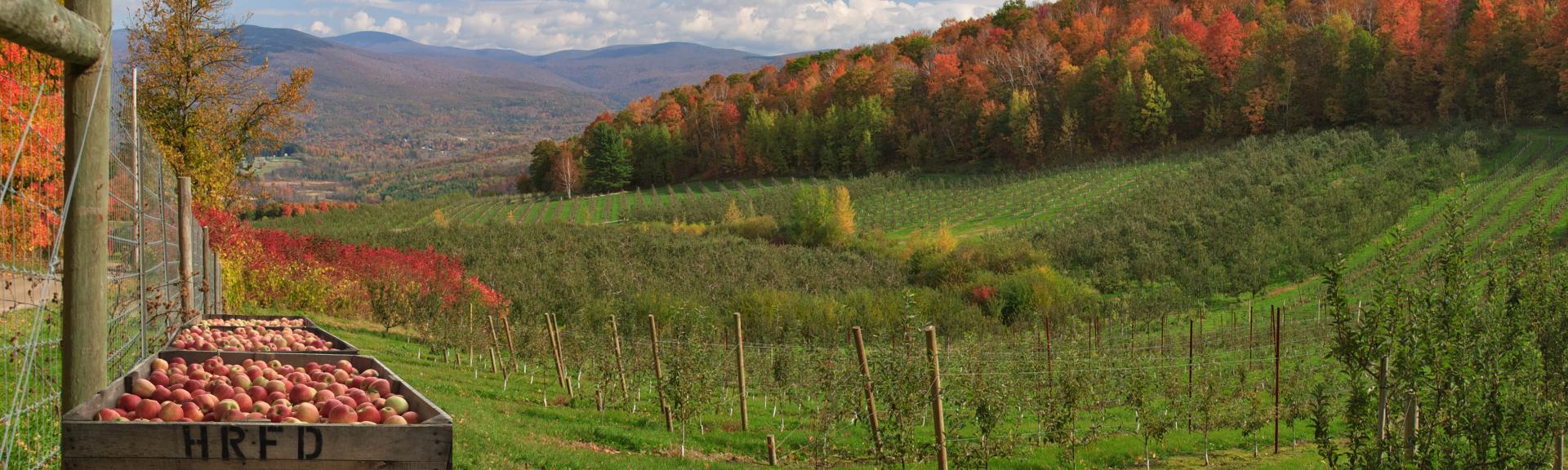 Amazing to the Core: Meet Hudson River Fruit Distributors