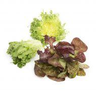 Lettuce & Salads