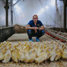La Belle Farm