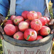 Hudson River Fruit
