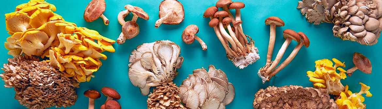 Rhode Island Mushroom Co.