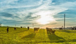 Clover Farms Dairy