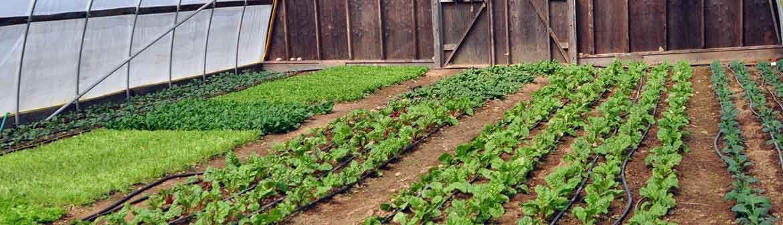 Eckerton Hill Farm