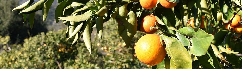 Garcia Organic Farm