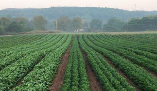 Alewife Farm