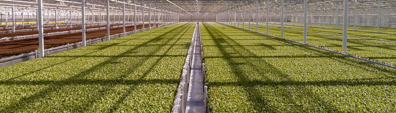 Little Leaf Farms