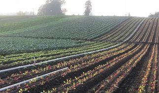 Tomatero Organic Farm