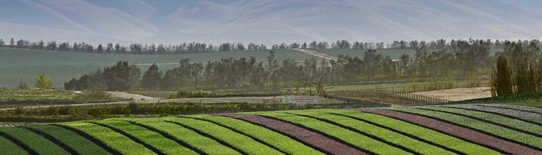 Babe Farms