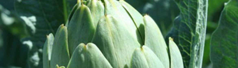 Ippolito Produce
