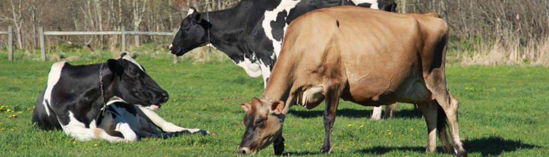 Arethusa Farm Dairy