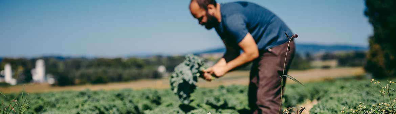 Lancaster Farm Fresh