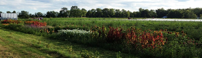 Remembrance Farm