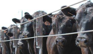 DemKota Ranch Beef