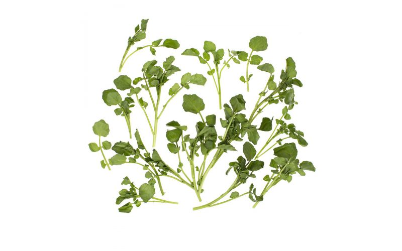 Bunched Watercress