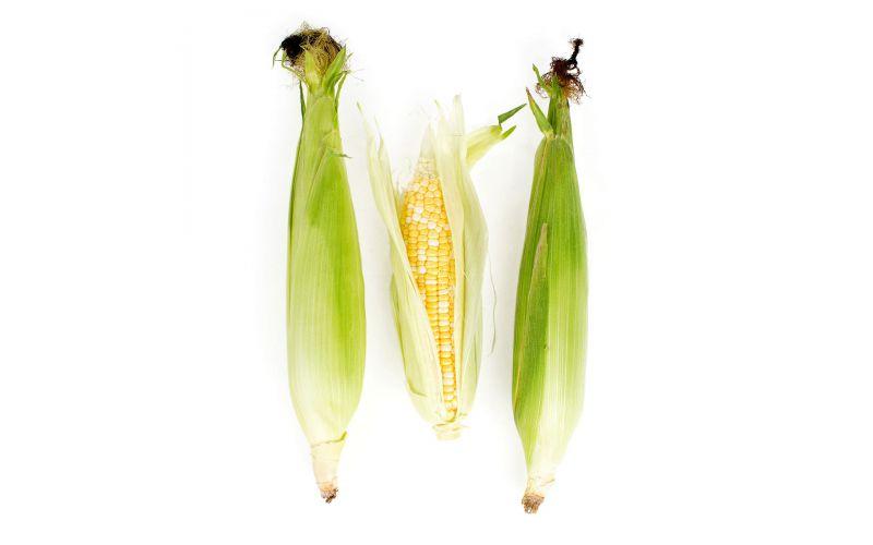 Hudson Valley Bi-Color Corn