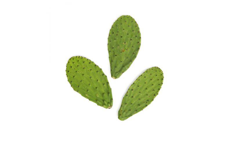 Cactus Pads