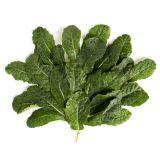 Baby Lacinato Kale