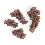 Organic Red Canadice Grapes