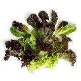 Organic Ultra Baby Lettuce Mix