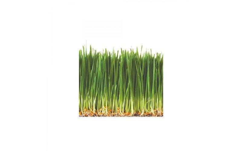 Organic Wheatgrass Tray