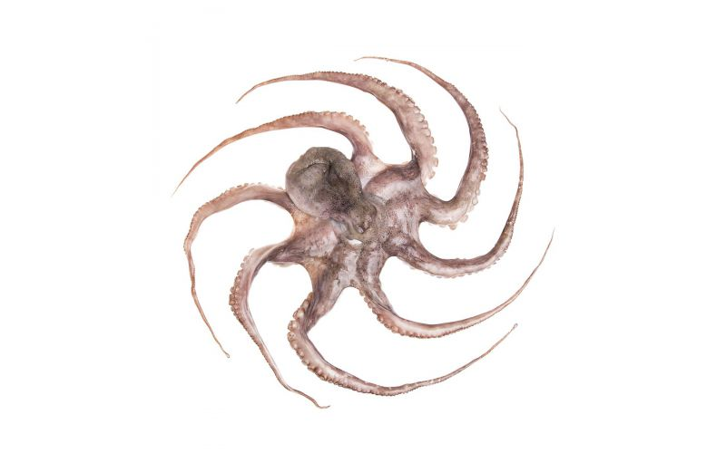Spanish Tenderized Octopus IQF 6-8 LB