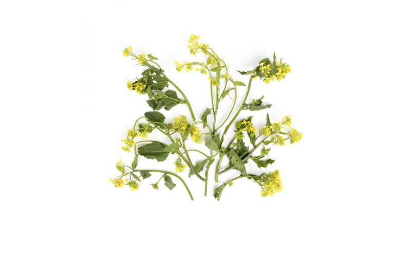 Organic Mustard Flowers