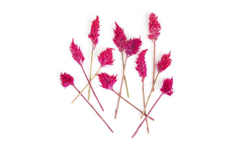 Firestix Flowers