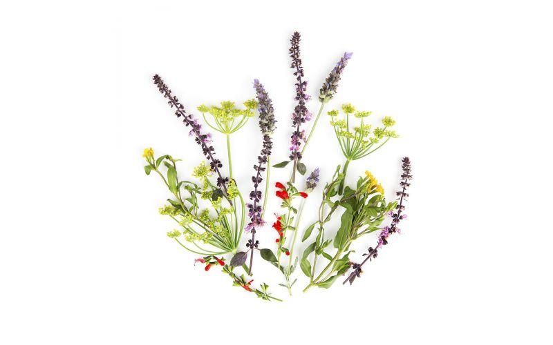 Herb Flower Mix