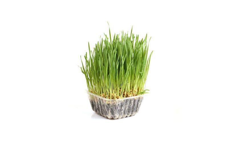 Organic Cut Wheatgrass