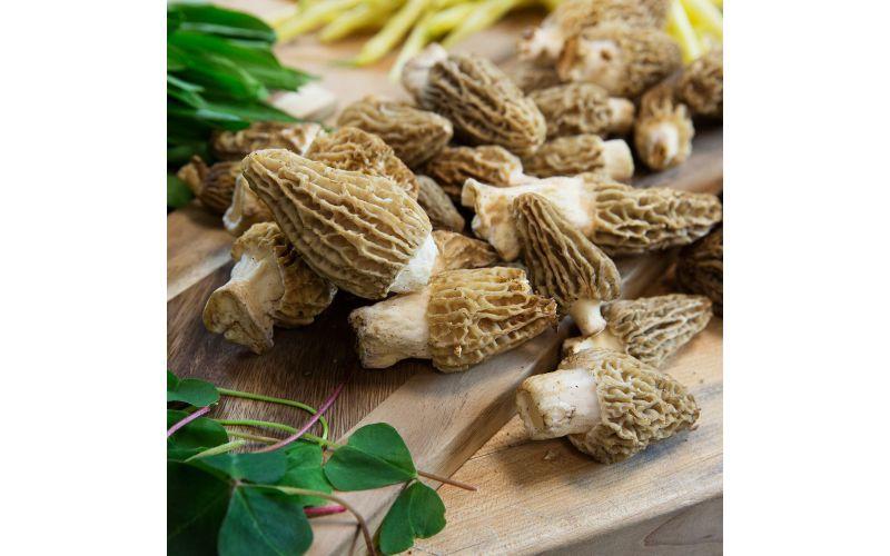 Blonde Morel Mushrooms