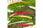 Organic Rainbow Swiss Chard
