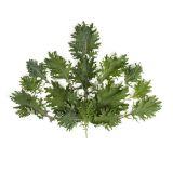 Organic Baby Kale