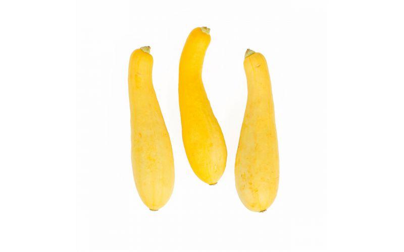 Organic Fancy Yellow Sunburst Squash