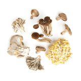 Organic Chef's Mix Mushrooms