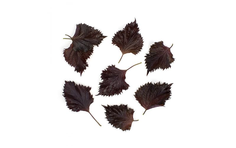 Red Shiso Oba Leaves