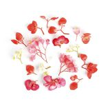 Begonia Flower Mix