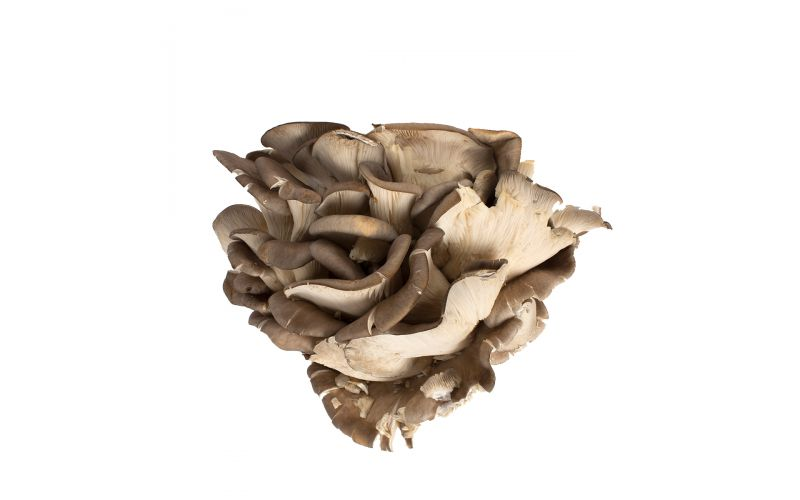 Organic Maitake/Hen of the Woods Mushrooms