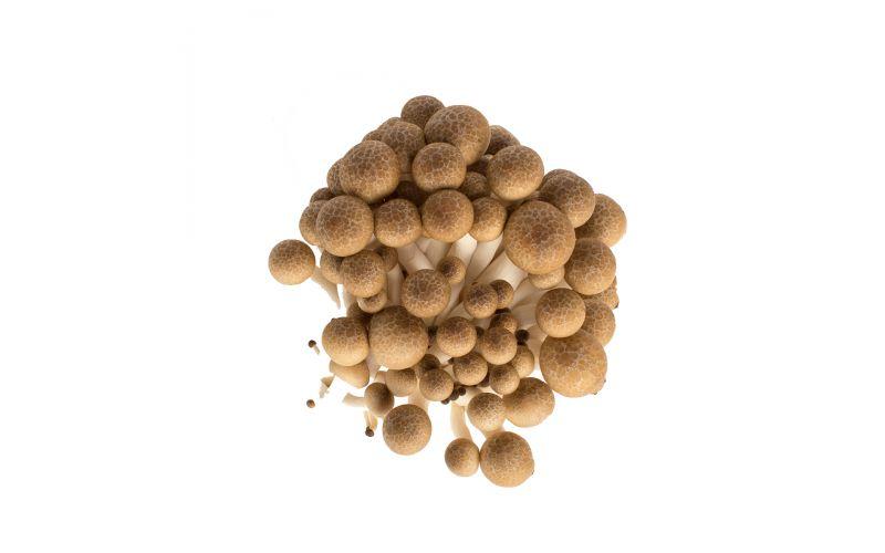 Brown Hon Shimeji Mushrooms