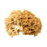 Cauliflower Mushrooms