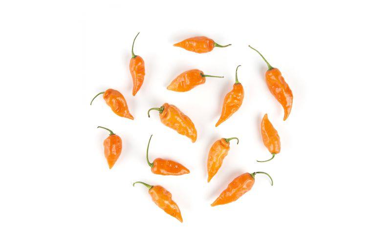 Organic Orange Habanero Peppers