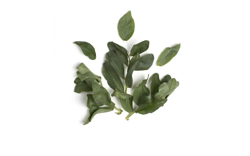 Organic Fava Leaves