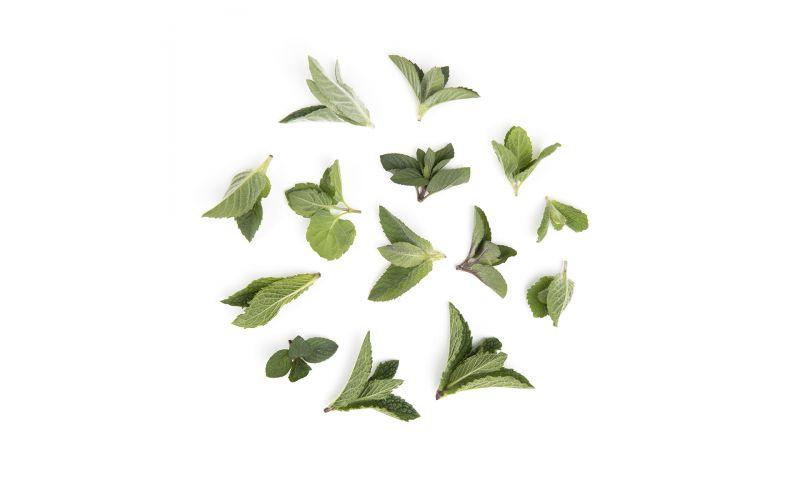 Herbs Top Mix