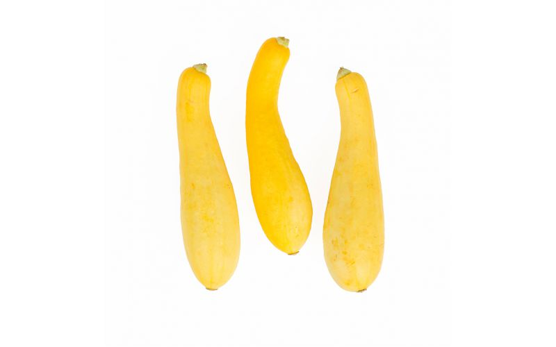 Medium Yellow Squash