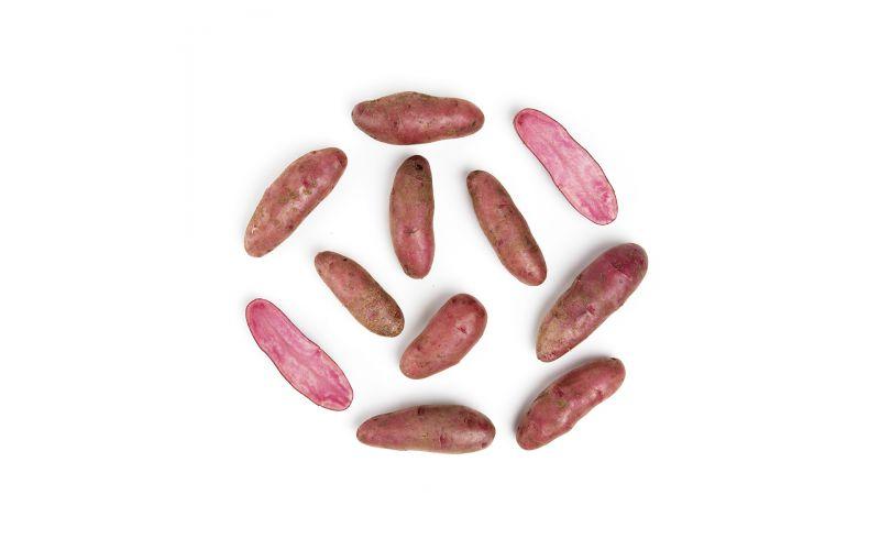 Organic Red Adirondack Potatoes