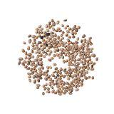 Dried Borlotti Beans