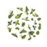 Micro Mint Tops