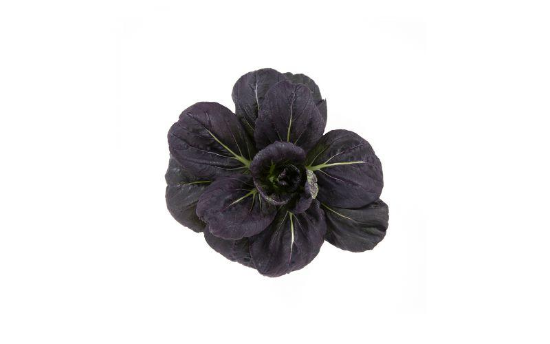 Organic Purple Lady Bok Choy