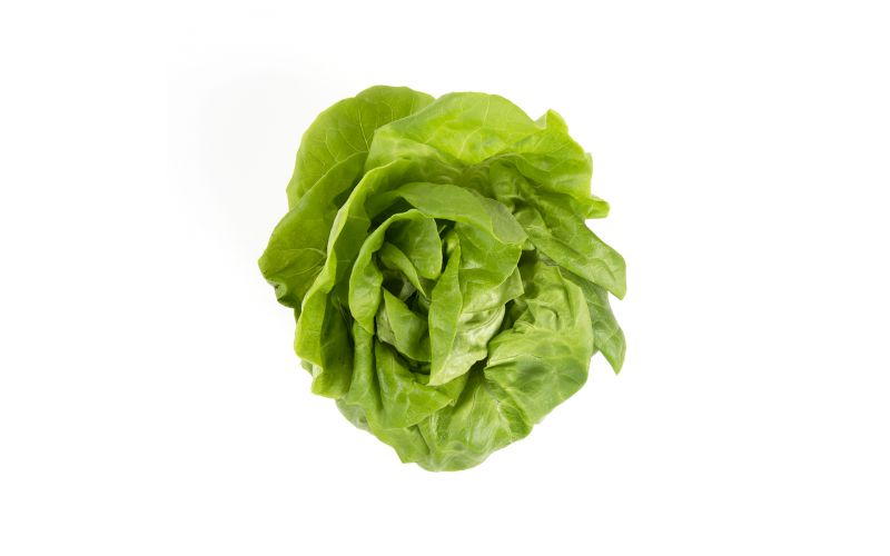 Organic Hydro Boston Lettuce