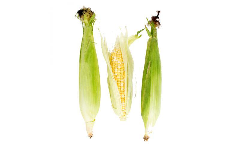 Organic Bi-Color Corn